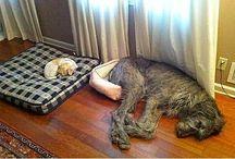 psí život