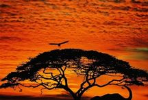 Africa the Continent OUR AFRICA / by Nefertiti
