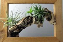 rastlinky tvorba