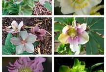 kvetinová záhrada