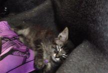 Luke - meu gato / Painel do meu gatinho, registros desde sua chegada!