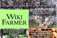 Almond Tree / http://www.wikifarmer.com/explore/agriculture/trees/almond-tree