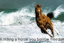 Horse Quotes / Inspiring quotes and images about horses.