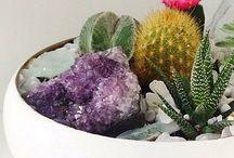Cacti Succulent Bonsai