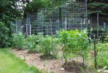 jardi potager
