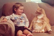 adores cat