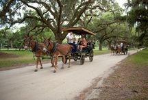 Historic Charleston Carriage Tours / Absolutely Charleston provides a variety of tours around Charleston, if you love history why not take a carriage tour and learn about the Charleston's history! #Charleston #Carriage #Tours #History #absolutelycharleston