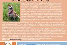 Miya - Adopted! / Shiba Inu- Female - 5 year old - Red