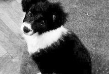 My Dead doggy