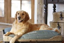 For The Furbabies / by Veridian Homes