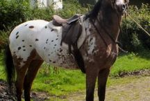 Horses & Tack / Beautiful breeds & horse gear