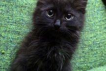 #Littleee Catsss ^-_-^
