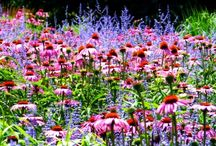 Flowers and Gardening...beauty and ideas / Flower Gardens and other gardens / by Dee Hess