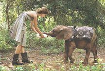 Elefantitas