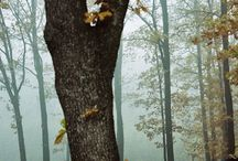 Chemins forestiers  / by Etienne Tabareau
