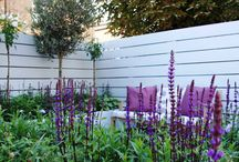 Purple & blue planting schemes / Plants and flowers