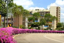 Streetscape of Singapore / A collection of the flora along the roads of Singapore