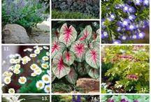Planten/bloemen/tuin
