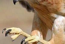 Хищные птички
