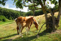 Cavalli / Allevamento cavalli