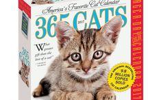 Calendars / Who doesn't love a cat calendar?