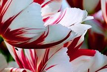 Inspired by Beauty and Flora / Inspirational beauty from the flowers of the world