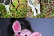 pet hats