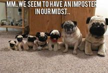 Dogs do the funniest things...