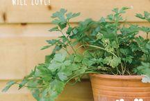 Petit Lou - Food & Gardening