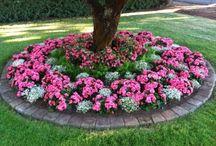 My new garden ideas