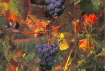 Living the dream / Vineyards / by Pellise Burns