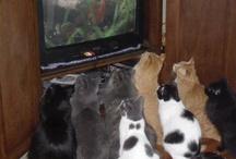Kitty cat  / Kity cat