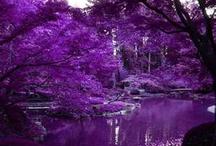 I just love purple!