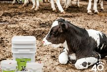 Tomlyn EPIC Calf Care / Tomlyn's EPIC Calf products are easy as 1, 2, MOO to help keep your herd healthy and make sure those youngsters flourish!