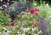 Flower and Garden Therapy