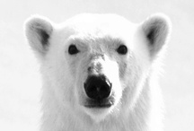 Polarbear / Post to multiple social networks and blogs at once! Request an invite: http://www.PolarbearApp.com