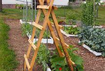 Gardening / by Lynn Thomas