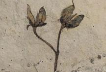The Evolution of Angiosperms