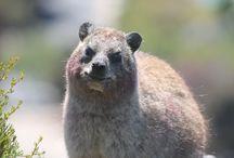 Hermanus Wildlife