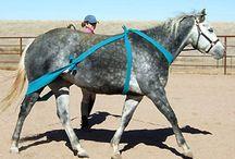 szkolenie koni/hors trening