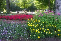Nos jardins d'annuelles / Chez nous, chaque année il y a du changement dans nos jardins d'annuelles. Venez vous inspirez et achetez vos plants au même endroit!