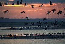 Lac du Der : Vie sauvage et ornithologie
