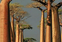 Africa  ಌ⋰⋱ಌ