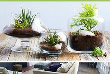 Plants in glass