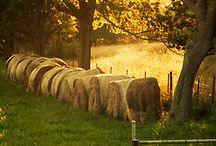 Hay Bales & Fields