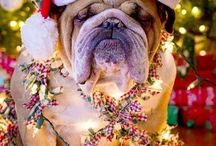 Bulldog and Christmas