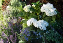 Hydrangeas in Containers / Be inspired to use your Endless Summer® hydrangeas in containers. It is perfect for a deck, patio or poolside and gives you the freedom to beautify different parts of your landscape and garden.