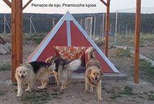 VETERINARIA Y MASCOTAS / El uso de pirámides no sólo se aplica en personas y plantas. También en animales de todas las especies. Nuestras mascotas también lo merecen.