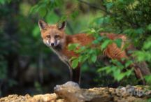 Welcome, Wildlife Watchers! / iTrip has vacation rental homes in many destinations and settings across the U.S. and Canada. One of our favorite things to do is enjoy the outdoors, and watch wildlife in their natural habitats. If you're an avid wildlife watcher or outdoor recreation lover, these are some spots you may want add to your bucket list.