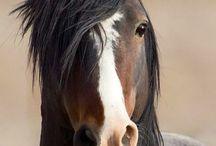 Smuk hest